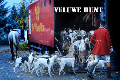 Veluwe hunt in Budel