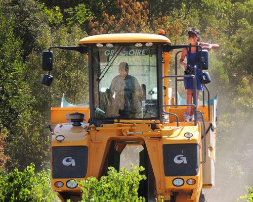 Druivenoogst-met-de-Gregoire-G7 - agrifotograaf Monique Sutman
