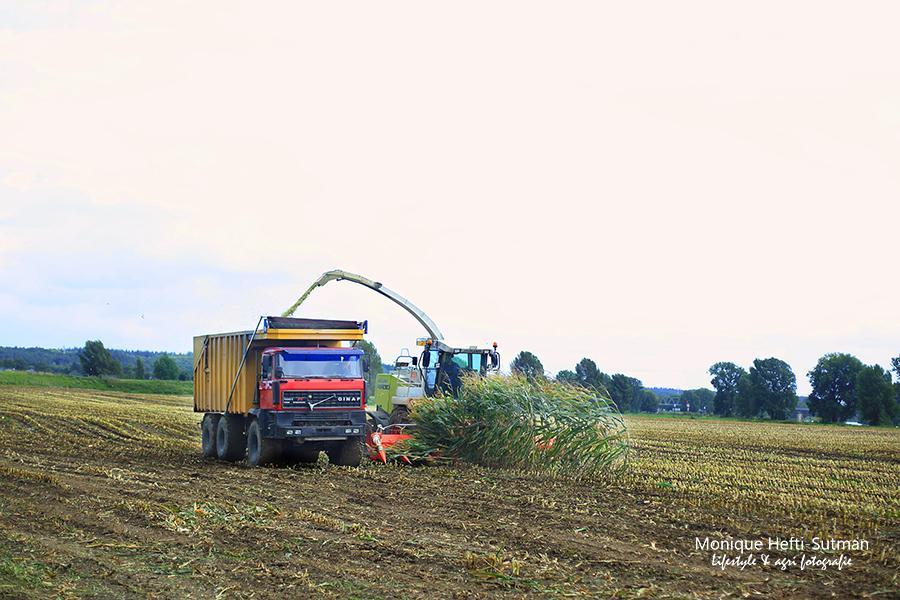 maisoogst loonbedrijf groesbeek