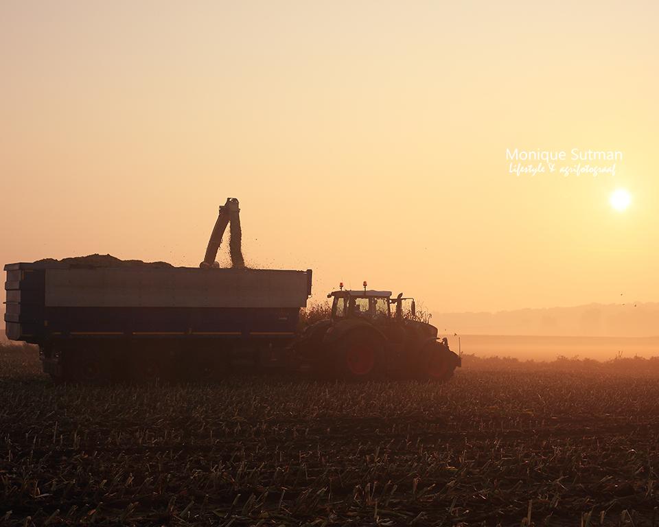 maisoogst zonsopkomst Agrifotograaf agrarisch fotograaf