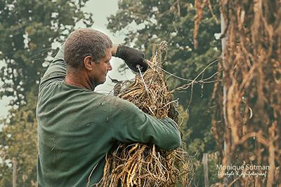 agrarisch fotograaf - Jan van Mullekom