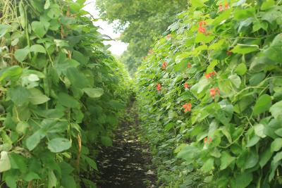 agrarische fotografie EMJA Limburg