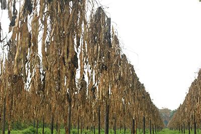 agrarische fotografie Limburg
