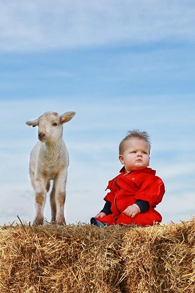 agrarisch portret - jongen met lammetje Ysselsteyn