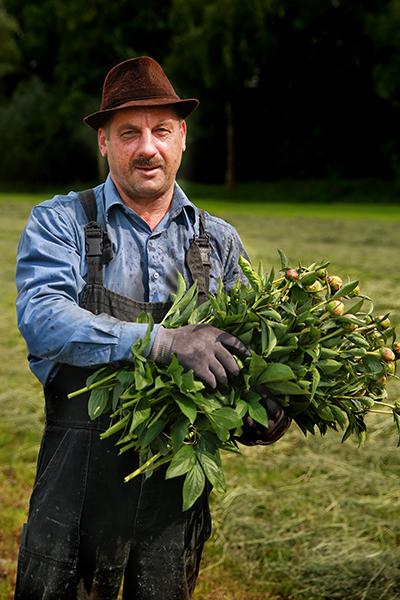seizoensarbeiders in de pioenenteelt