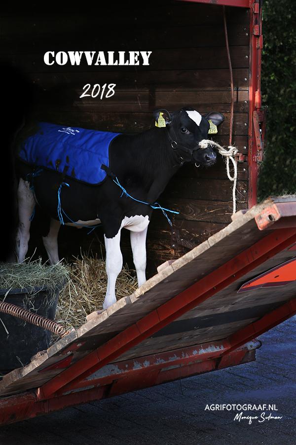 Dairy show Scherpenzeel