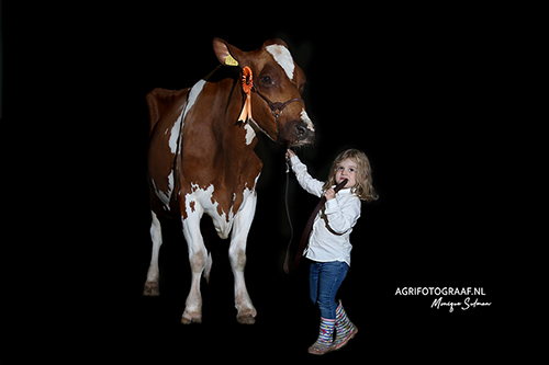 boerinnetje met koe op dairyshow